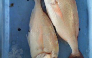 Pescados Sisco, Guia Comercial Benicarló